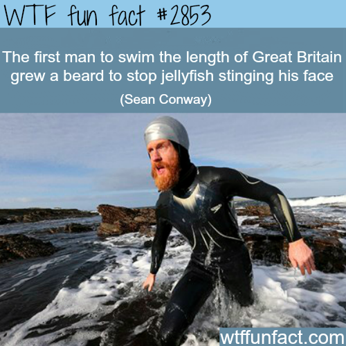 Another reason why you should a beard -  WTF fun facts