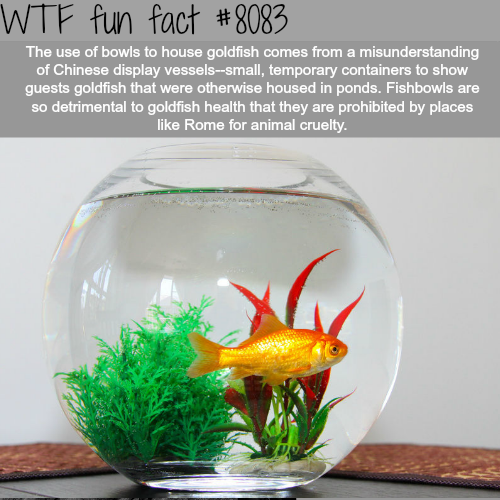Why you shouldn't put goldfish in a bowl - WTF fun facts