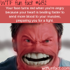 why your face turns red when you are angry wtf