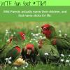 wild parrots wtf fun fact