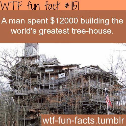 world greatest tree house