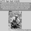 world war 2 dogs gunner wtf fun facts