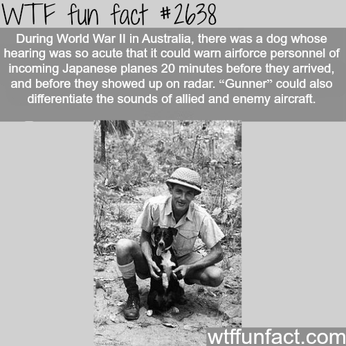 World War 2 Dogs
