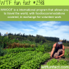 wwoof travel the world in exchange for volunteer