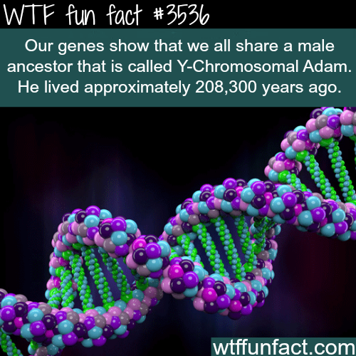 Y-Chromosomal Adam dates back more than 200 thousands years - WTF fun facts
