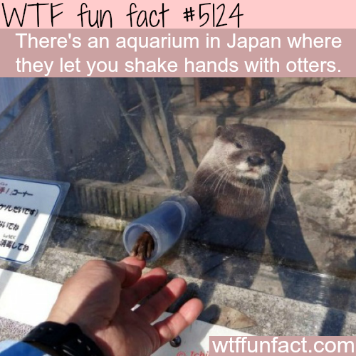 You can shake hands with otters in this Japanese Aquarium - WTF fun facts