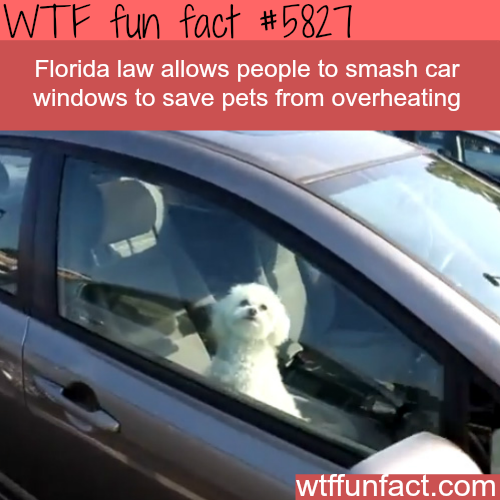 You can smash car windows to rescue pet from overheating - WTF fun facts
