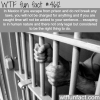you have the right to escape prison in this