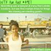 young nicki minaj wtf fun facts