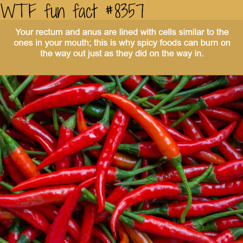 Your anus and mouth have similar cells - WTF fun facts