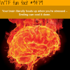 your brain on stress wtf fun fact