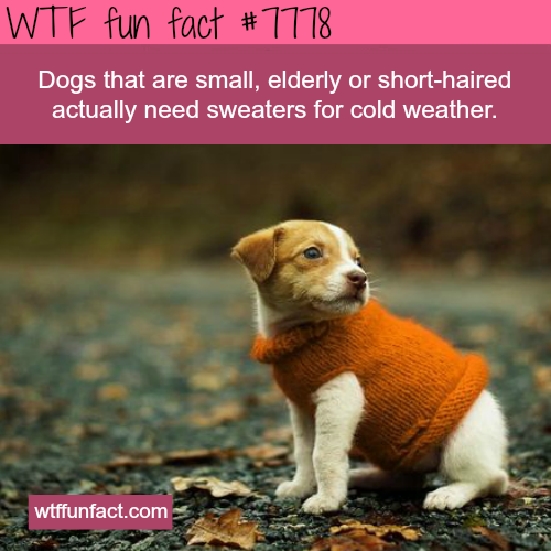 Your dog needs a sweater - WTF fun facts