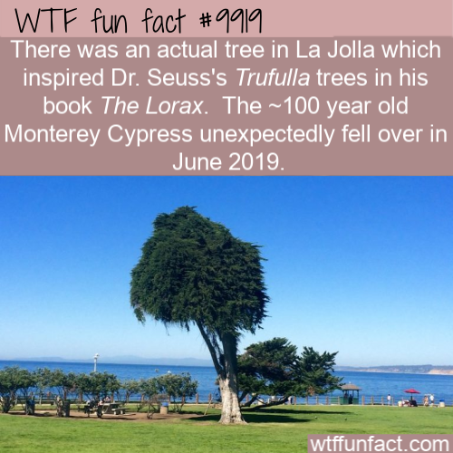 wtf fun fact real lorax tree