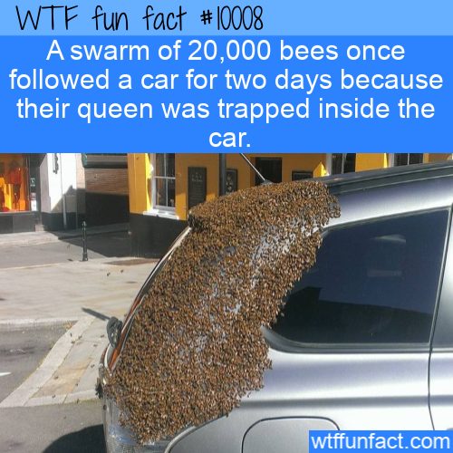 WTF Fun Fact -Following Car For Queen