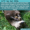 Fun Animal Fact – Sea Otter Pouch