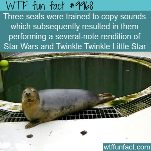 Fun Animal Fact Singing Seals