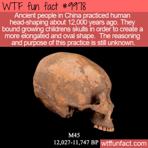 wtf fun fact head-shaping