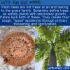 WTF Fun Fact – Palm… Grass?