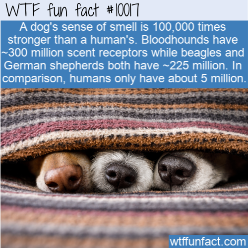 fun animal fact dog sense of smell
