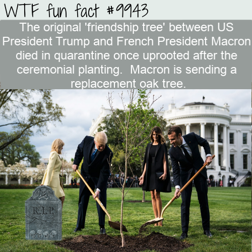 fun fact friendship tree dies