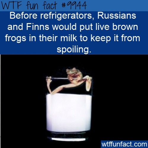 wtf fun fact frogs in milk