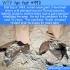 WTF Fun Fact – Giant Penguin Prank