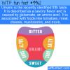 Fun Fact – Umami Taste