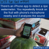 Food Fact – Watermelon App