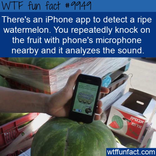 fun food fact watermelon app