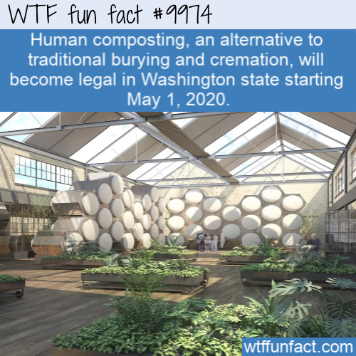 wtf fun fact human composting