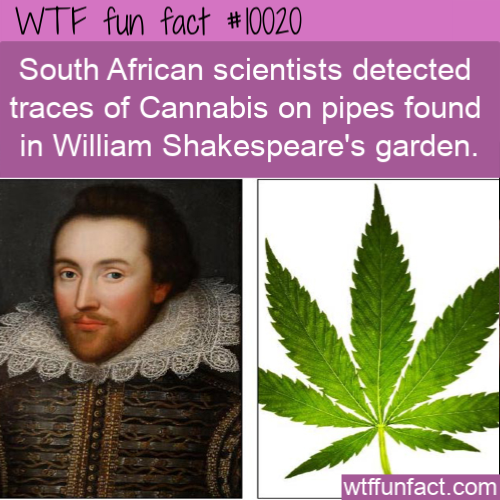 WTF Fun Fact - Cannabis Into William Shakespeare's Garden