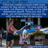 WTF Fun Fact – China Dog Credit Score
