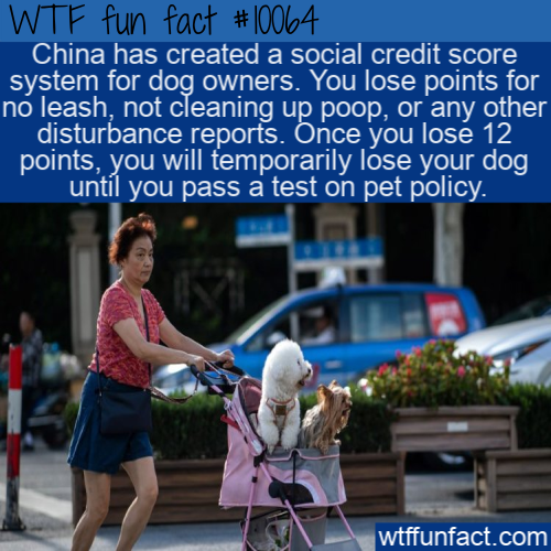 WTF Fun Fact - China Dog Owners