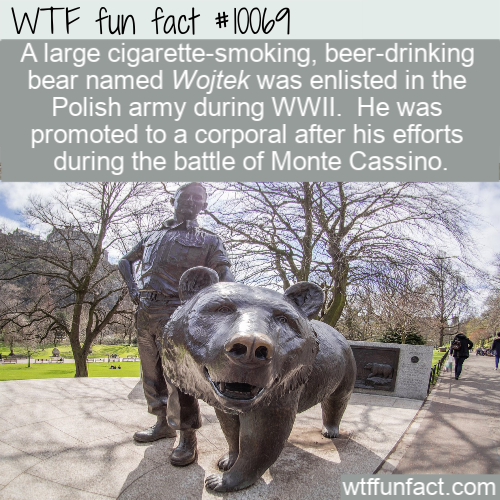 WTF Fun Fact - Polish Army Bear