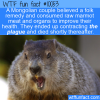 WTF Fun Fact – Marmot Causes The Plague