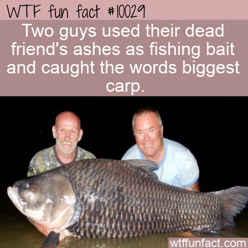 WTF Fun Fact - Fishing Legend