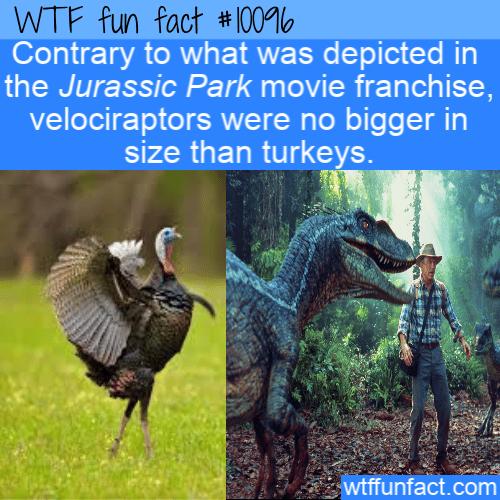 WTF Fun Fact - Velociraptor