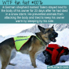 WTF Fun Fact – Talero The Dog