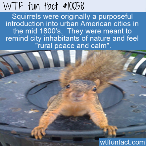 wtf fun fact - squirrels on purpose