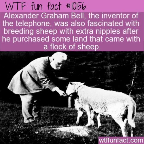 WTF Fun Fact - Alexander Bell's Sheep