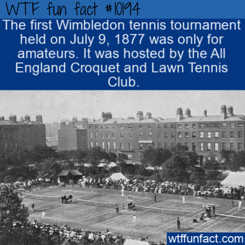 WTF Fun Fact - Wimbledon For Amateurs