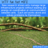WTF Fun Fact – Ant Infrastructure Projects