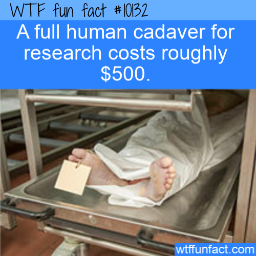 WTF Fun Fact - Cadaver