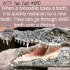 WTF Fun Fact – Crocodile Teeth