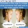 WTF Fun Fact – Echolalia