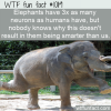 WTF Fun Fact – Elephant Neurons