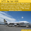 WTF Fun Fact – Emergency For Sheep Farts