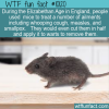WTF Fun Fact – Mouse Treatment