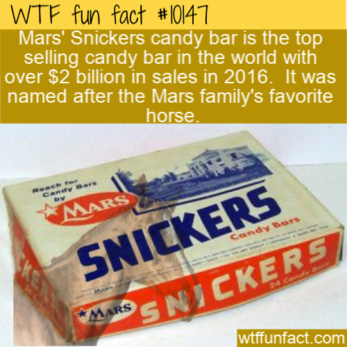 WTF Fun Fact - Snickers The Horse