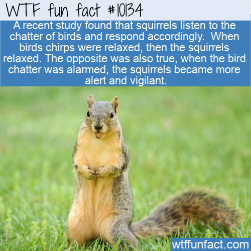 WTF Fun Fact - Squirrel Eavesdroppers